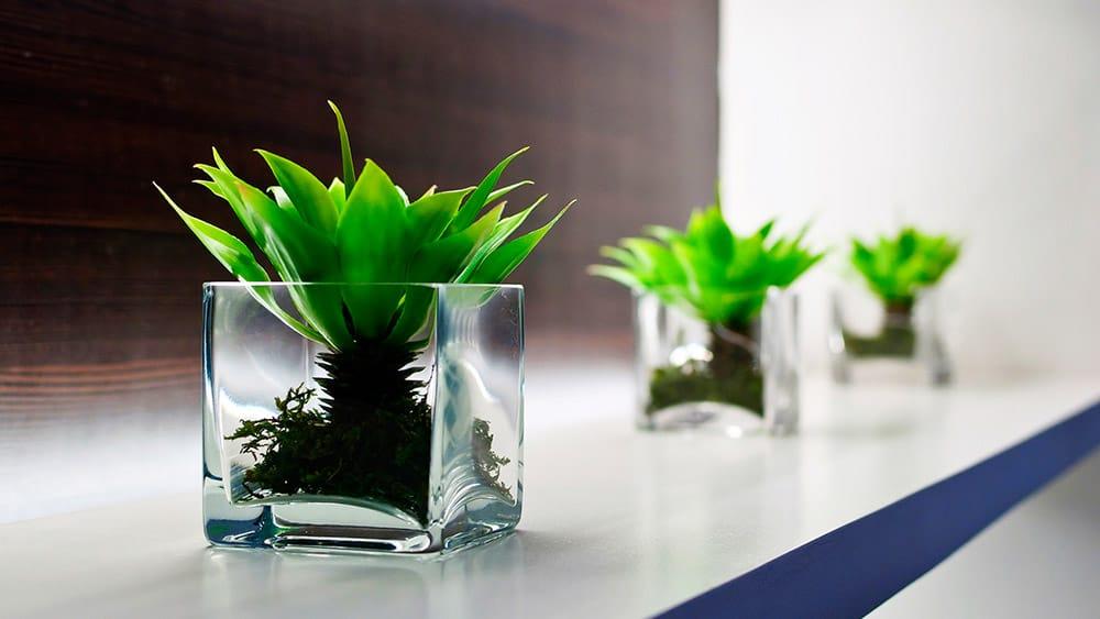 post-workspace-plants